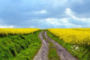 黄色い花と果てしない道