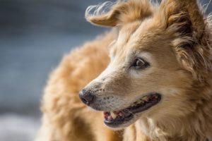 笑う茶色の犬