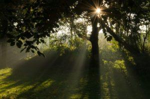 森林に差し込む光