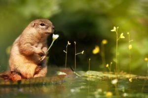 花を持つリス