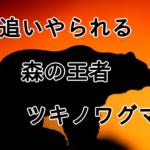 足尾山地に住む「ツキノワグマ」の紹介、熊への対策・考え方