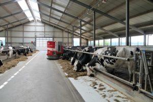 牛舎にいる牛・家畜