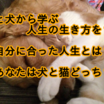 ネコ科とイヌ科の動物から学ぶ生き方!あなたは、どのように生きる?