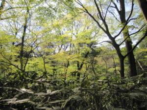 「国立科学博物館附属 自然教育園」の木々