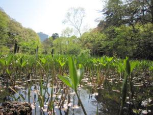 「国立科学博物館附属 自然教育園」の池