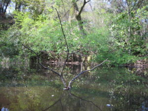 「国立科学博物館附属 自然教育園」の池と鳥