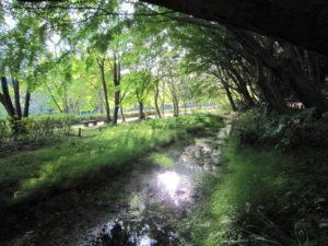 21世紀の森と広場の川