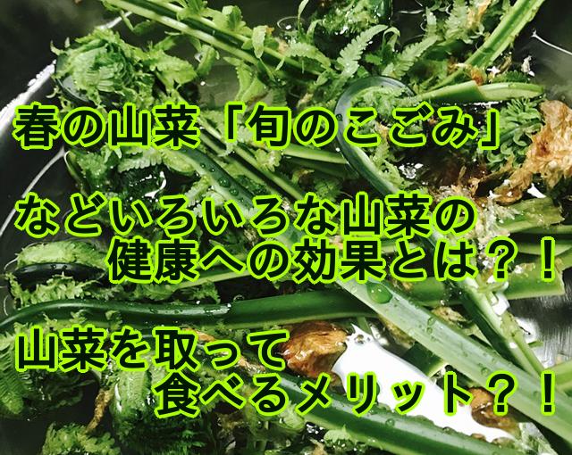 春の山菜「旬のこごみ」の健康への効果、山菜を取るメリット?!