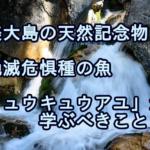 奄美大島の天然記念物、絶滅危惧種の魚リュウキュウアユから学ぶこと