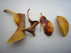 枯れた落ち葉
