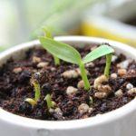 人気の観葉植物を「人として考える」育て方・管理・水やりのコツについて